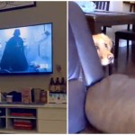 Timid Dog Watching 'Star Wars' For the First Time Hides Behind the Couch When Darth Vader Appears