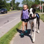 How a Wonderful Great Dane Helped a Girl With a Genetic Bone Condition Walk Without Assistance