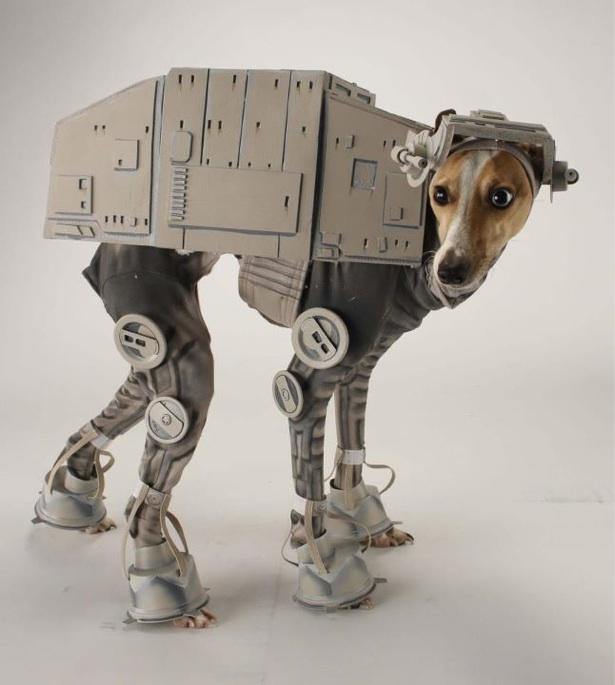at-at-dog