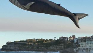 Blue Whale, un cerf-volant réaliste de 100 pieds de long par Peter Lynn