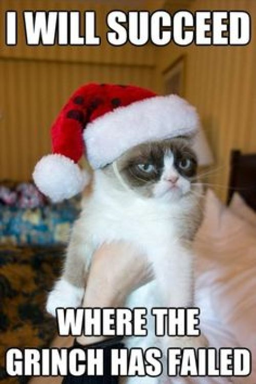 Grumpy Cat Will Succeed image