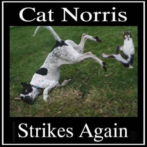 Cat Norris Strikes Again image