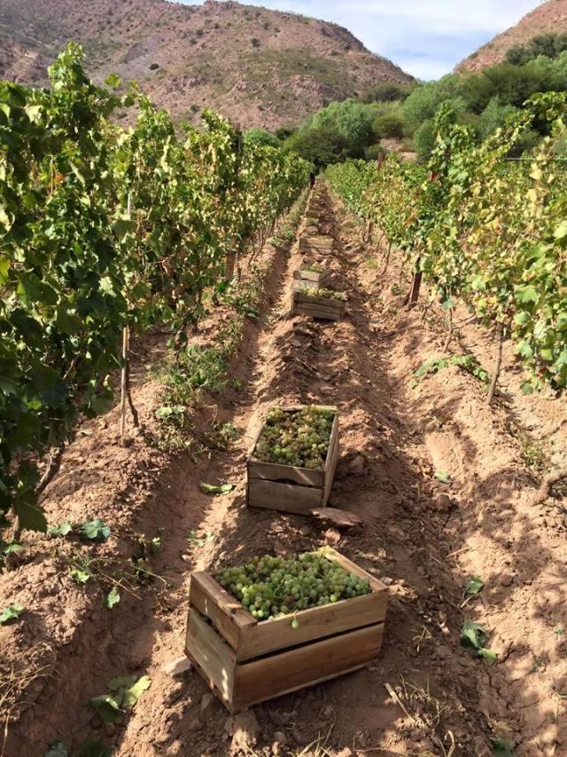 Vino Bolivia Lau Malbec