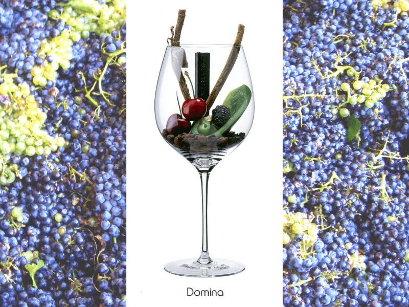 Domina Variedad de vino