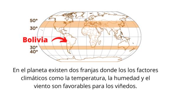 Factor altura en el vino de Bolivia