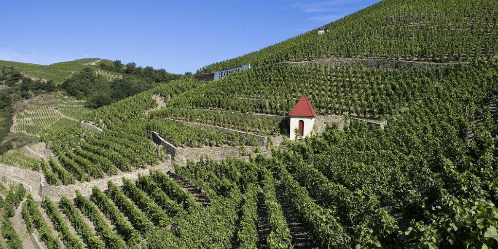 Côtes-du-Rhône viñedos