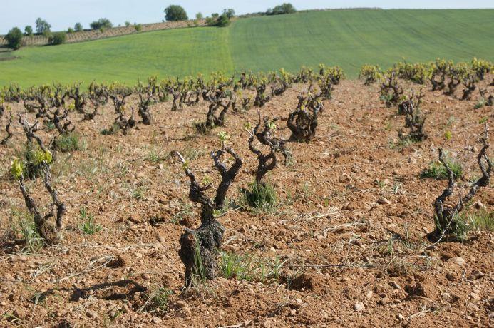 Los suelos de los viñedos