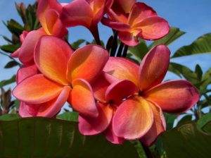 flowers-649728_640