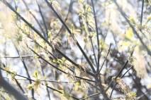 Spring (3)