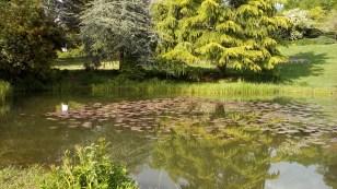 Japanese Garden, Clarens CH
