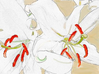 flowers-in-white-600