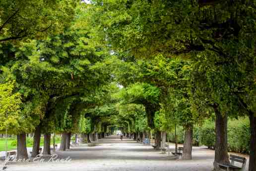 Tree-lined path in Augarten