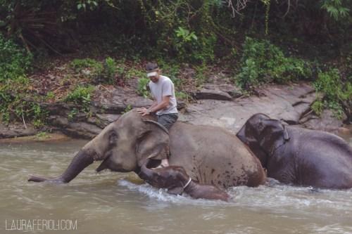 elephantriver