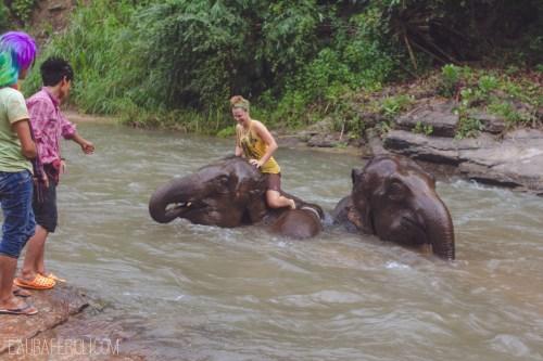 elephantriver2
