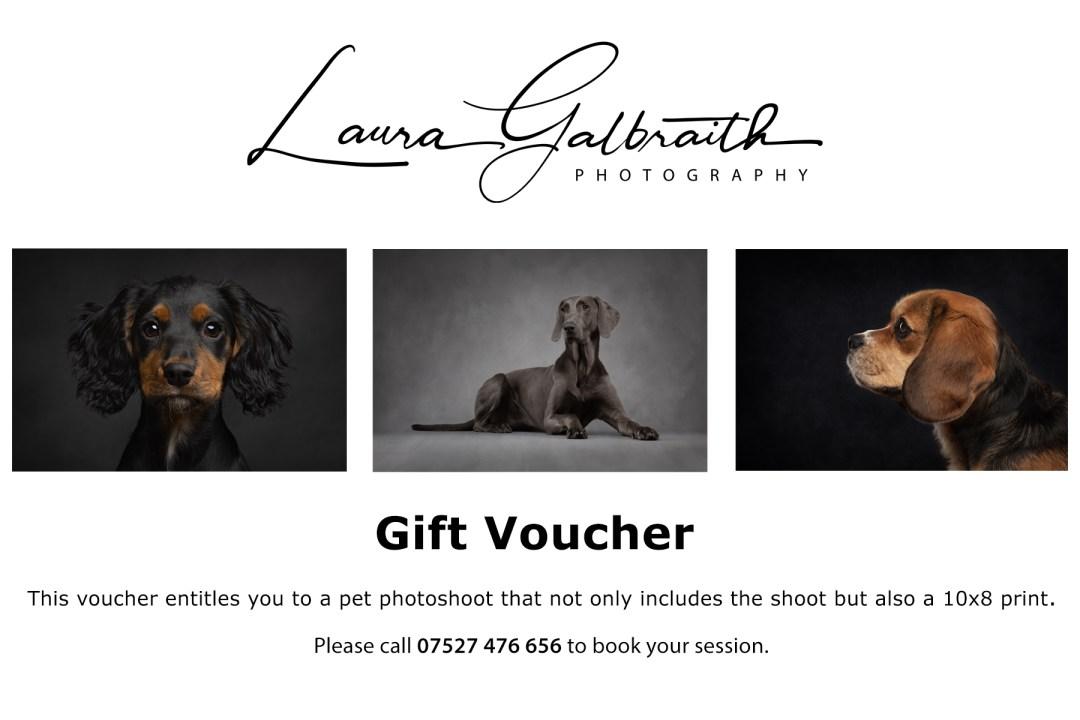 pet photography cambridge gift voucher
