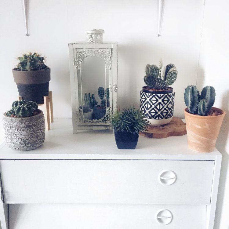 Decoración con cactus