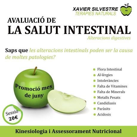 Flyer Xavier Silvestre Teràpies Salut Intestinal