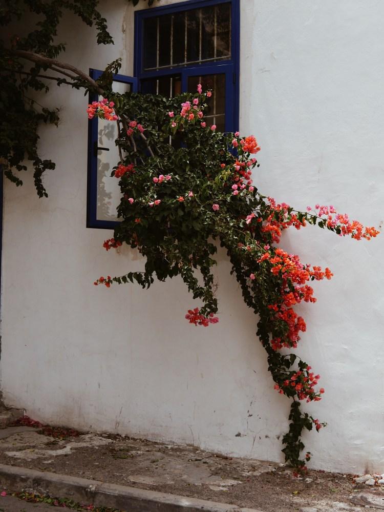 Tel Aviv Flowers on Tree