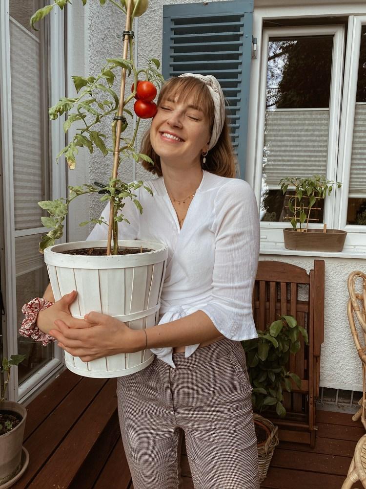 Selbstanbau Tomaten