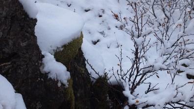 Lava, Moos und Schnee