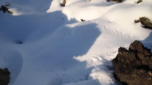 Schneespuren richtig herum - nur von wem oder was?