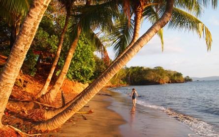 Das Klischee-Tropen-Strand-Bild