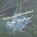 Waterfall adventures and new paintings blog cover