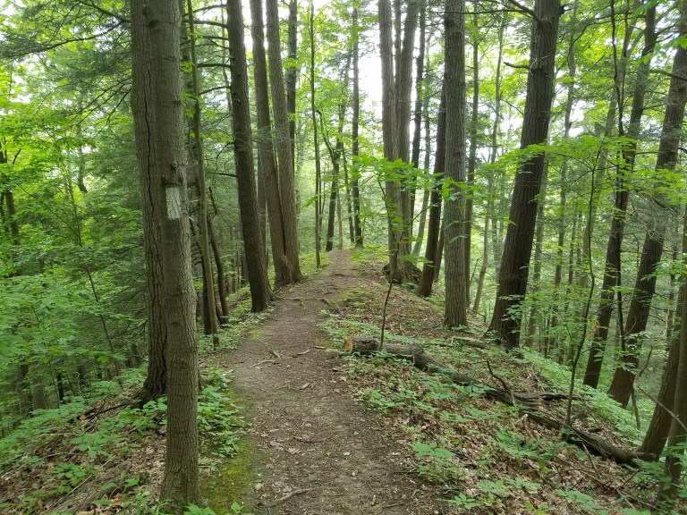 Photo of Sweedler Preserve trail in Ithaca NY by Laura Jaen Smith