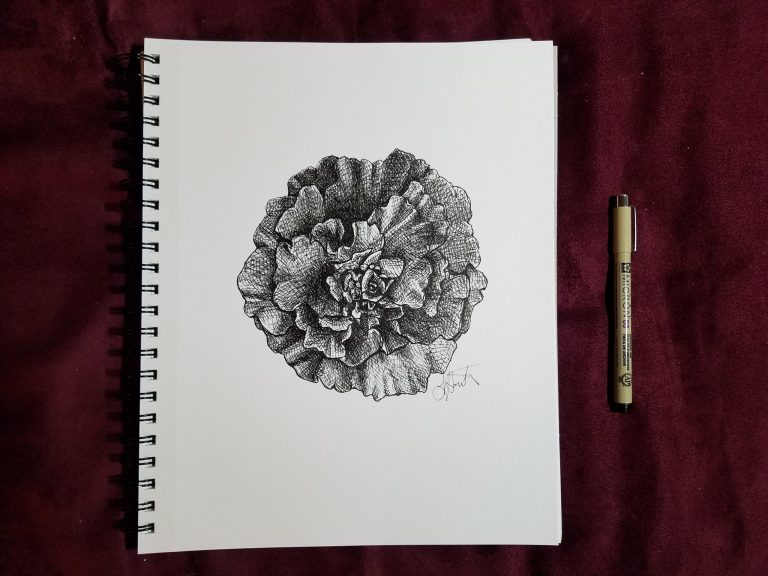 Sketchbook view with pen of Marigold by Laura Jaen Smith. Black and white ink drawing of giant marigold flower.