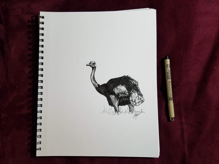 Ostrich by Laura Jaen Smith. Sketchbook view of ink drawing and pen