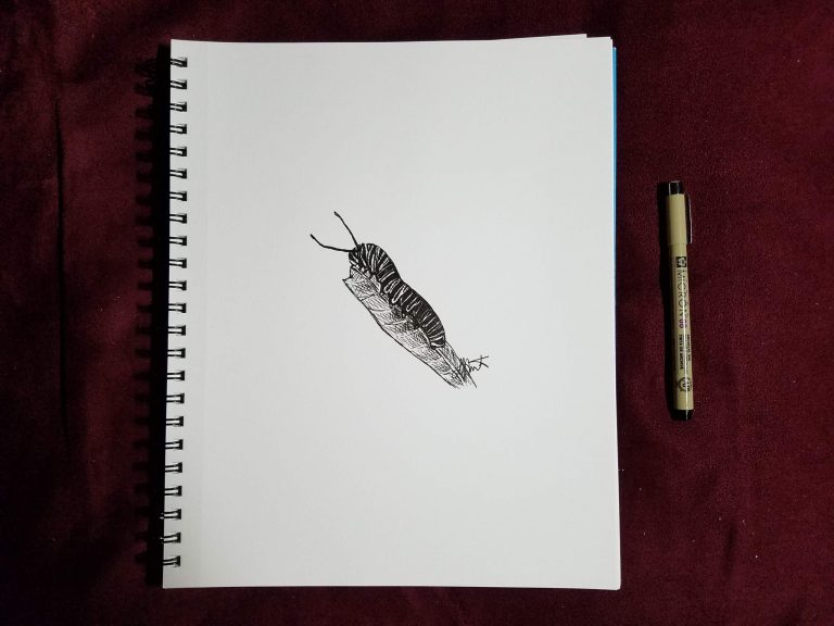 Caterpiller by Laura Jaen Smith. Sketchbook image with pen