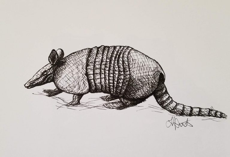 Armadillo by Laura Jaen Smith. Black and white ink drawing of an armadillo walking.