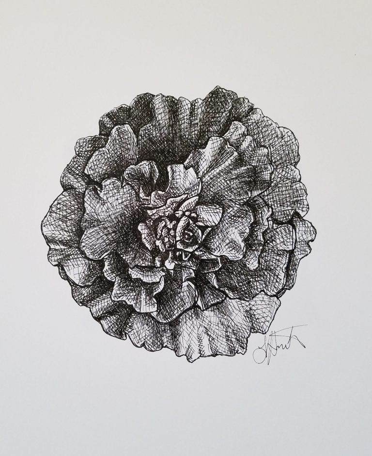 Marigold by Laura Jaen Smith. Black and white ink sketch of a Mexican cempasúchil