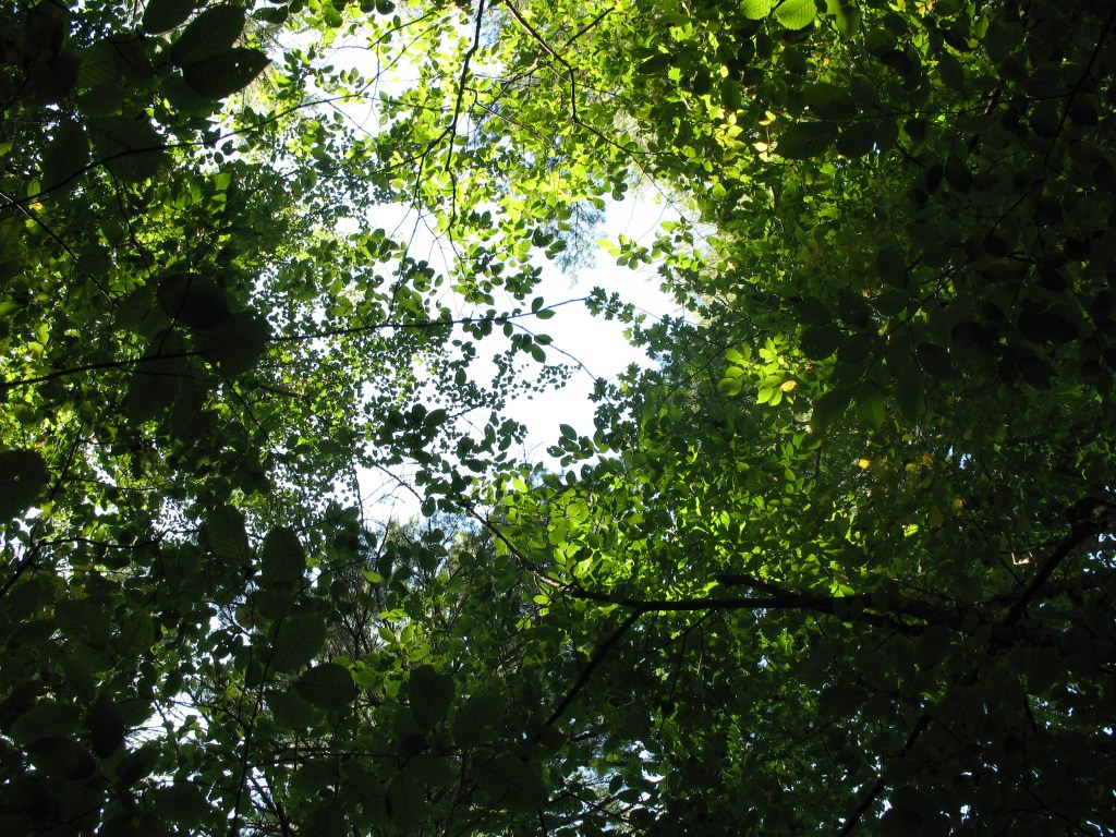 7 Gratitudes: Moments in the Woods