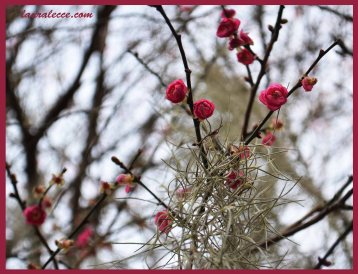Confused Blossoms
