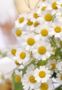 All petals present