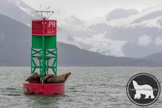 Juneau One (12 of 14)-2