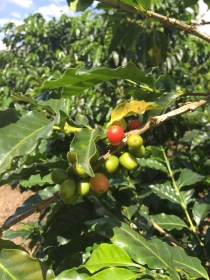 Colombian Coffee Production
