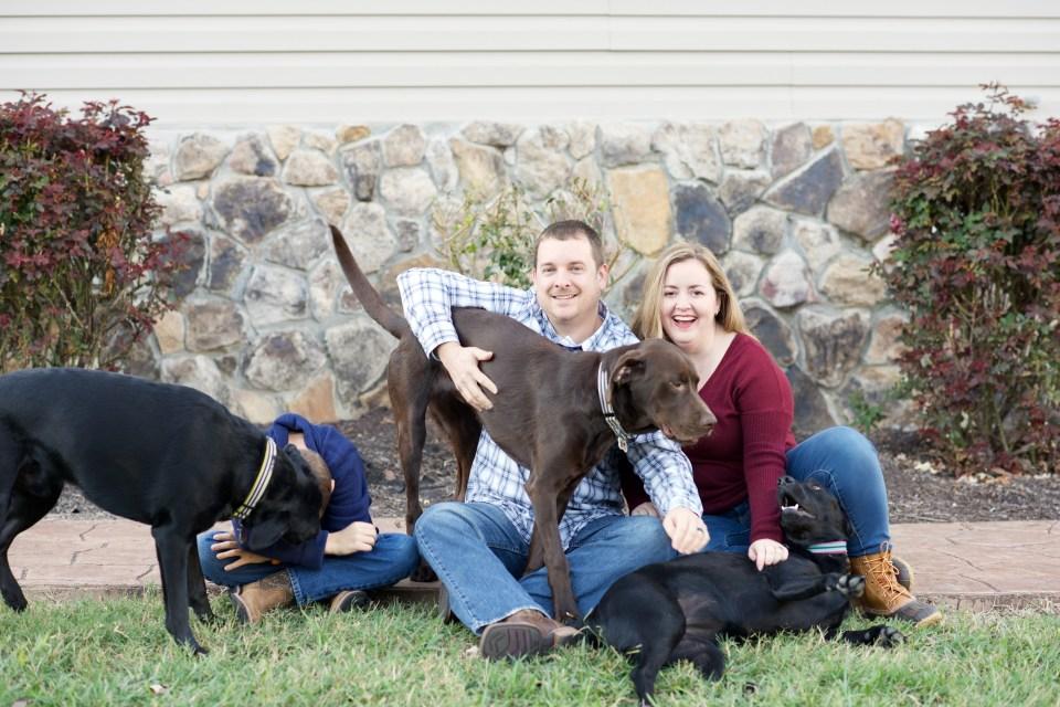 lab, labrador, retriever, black lab, chocolate lab, dog, dogs, rescue, adoption, foster