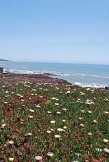 6cali coast