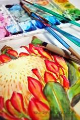4protea flower sketch watercolor