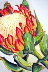 5protea flower sketch watercolor