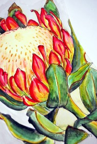 5protea flower sketch watercolor