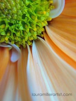 5iphone macro lens photos