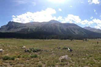 Panoramica Yosemite