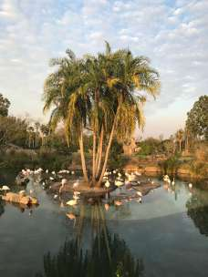 Flamingos Safari