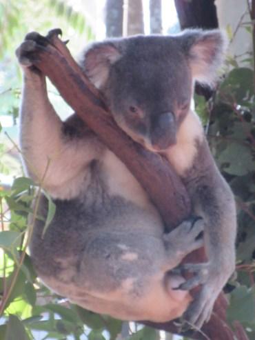 "The ""I am not a morning koala, do not disturb me"" look"