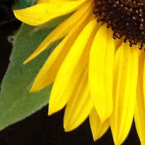 flower3_sq_z_500
