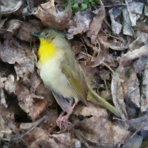bird on ground