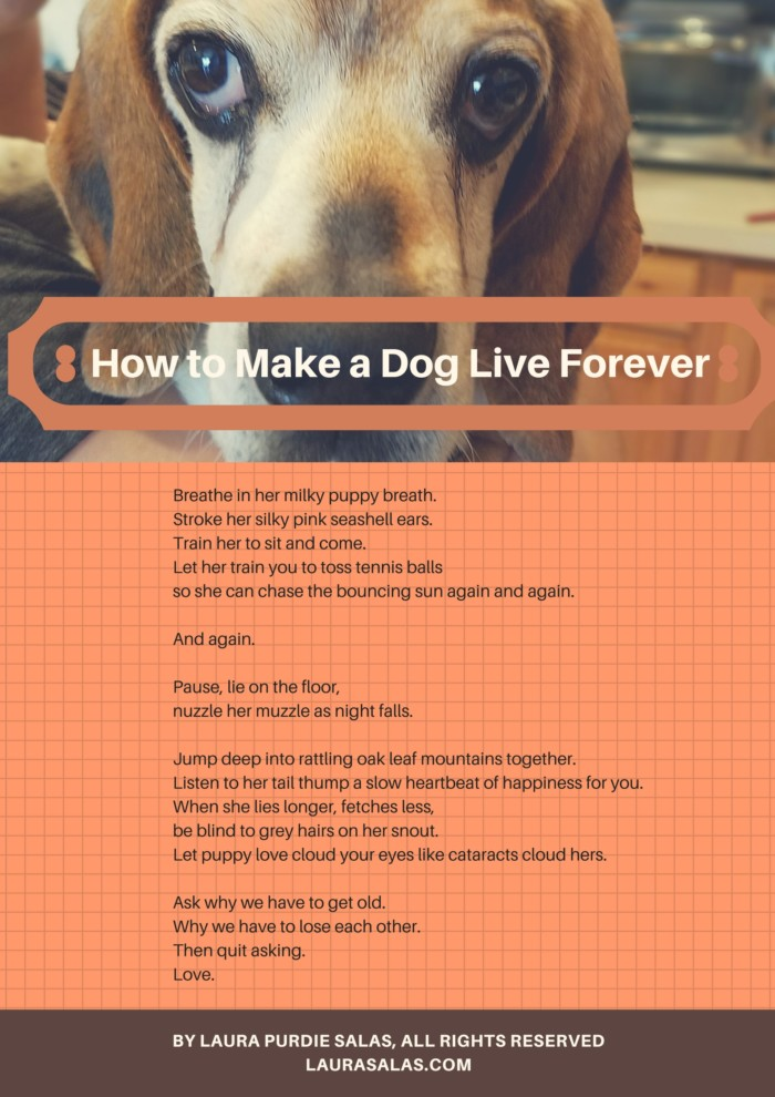 How to Make a Dog Live Forever